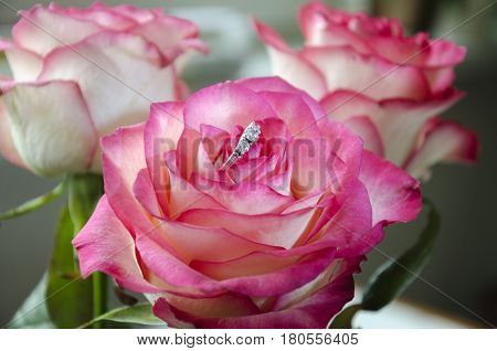 Silver ring with stones in a bud of a bright pink rose for a holiday for the beloved