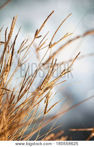 Closeup of a clump of dry grass in sunshine