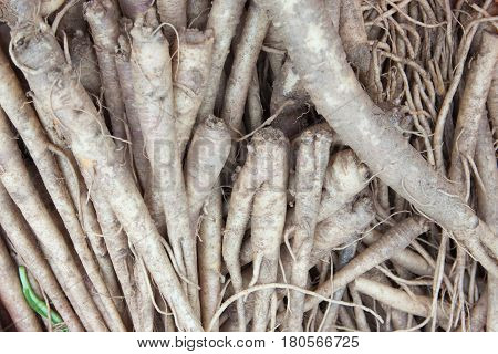 The closeup of ginseng background in the market