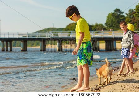 Connection between animals and kids concept. Sportive mixed race dog and children playing together. Active child with puppy having fun.