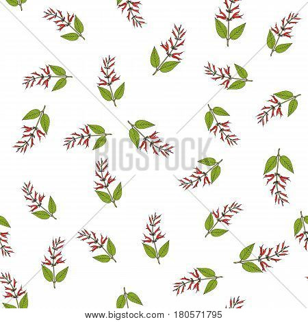 Mirto sage Salvia elegans , medicinal plant. Seamless pattern with red flowers