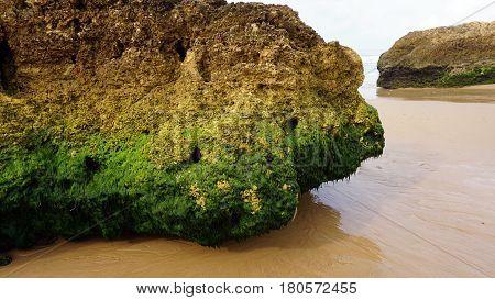 Green Sea Grass