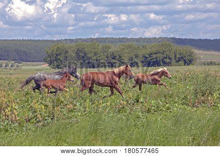 A Herd Of Horses In A Field