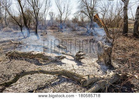 Burning Trees In Wasteland