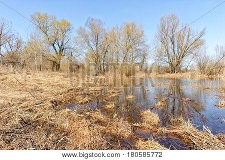 Lake, Hay And Tree