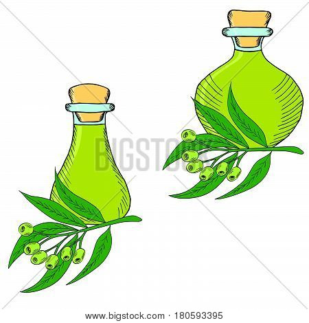 Hand drawn eucalyptus leaves and fruits. Flasks (bottles containers jugs) with eucalyptus oil. Set.