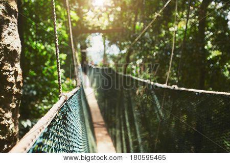 Canopy Walk In Rainforest
