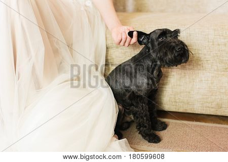 the bride in a white dress scratches her black dog for an ear. concept of love to pets.