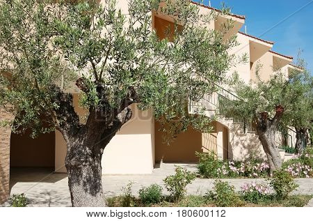 Metamorphosi Greece - May 07 2012: View of beige buildings and olive trees in the Greek Village Mare hotel.
