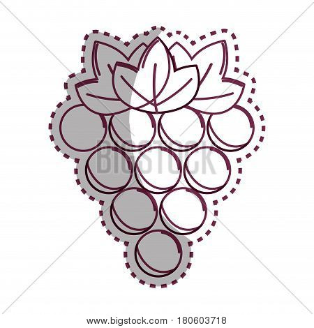 sticker silhouette grapes fruit icon image, vector illustration design stock
