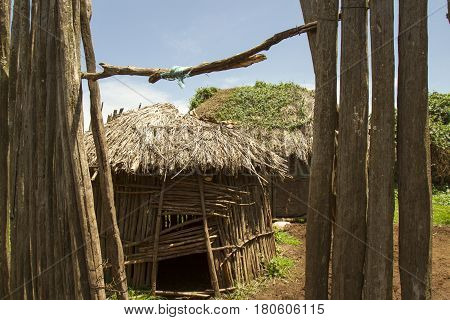 Thatched Maasai Huts In Krall In Village