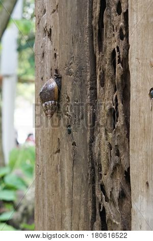 Snail crawling on old wood in a garden