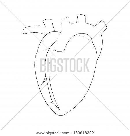 human heart icon image vector illustration design  simple sketch line
