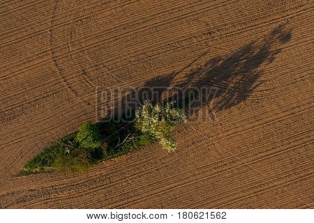 Spring plowed and sown fields. Aerial view