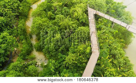 top view walk at wooden sky walkway in forest with trees and river at the morning sunrise.(aerial forest view)