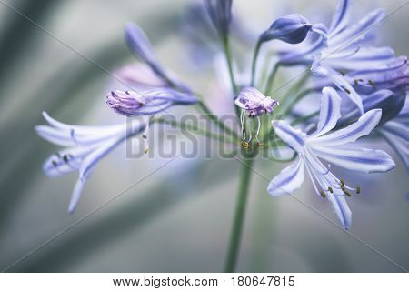 background nature Flower. Garden flowers. blue flowers.