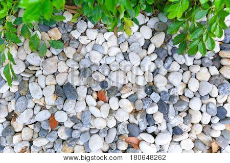 Green Plant With Rock. Round Stone Background, White Clean Round Pebble Stone Texture.
