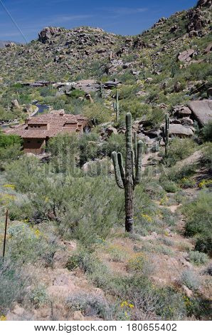 Saguaro In A Village Near Pinnacle Peak Park
