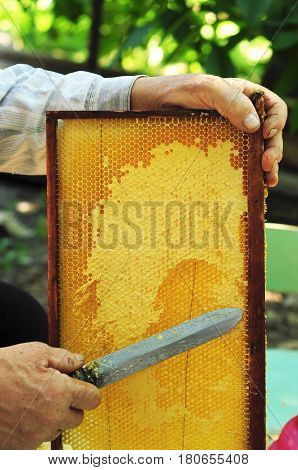 Close up of Old Man Human Hand Extracting Honey from Yellow Honeycomb Outdoor. Beekeeper Cuts Wax Off from Honeycomb Frame with Special Knife.