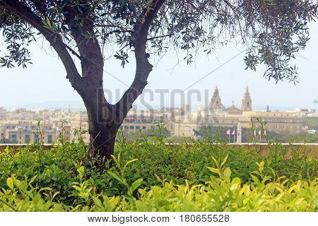 In the park Upper Barraka Gardens in Valletta Malta. View to Floriana