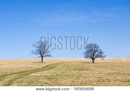 Spring Meadow And Two Solitaire Trees Under Blue Sky