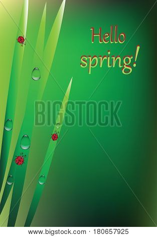 Ladybug, grass and dew. Vector illustration. Red ladybugs and dew drops on a green background. Design for banner, poster, greeting, invitation cards, illustrations of children's book.