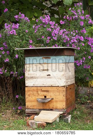 Cozy Old Colorful Beehive in the Garden and Aster Amellus Flowers Background in Autunm.