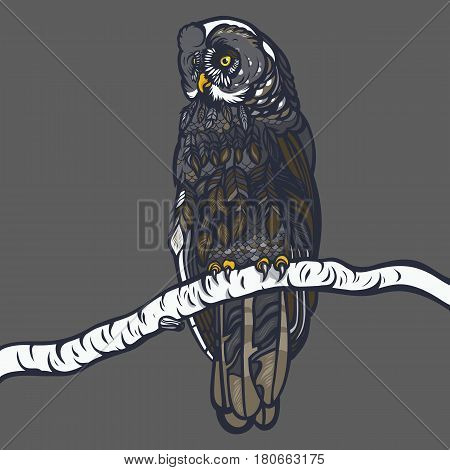 Strix nebulosa. Owl sitting on a branch of a birch. Realistic illustration. Vector.