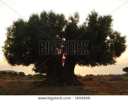 Treesilhouette
