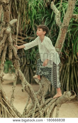 A boy in a white shirt and in wide trousers climbing in the roots of a tree