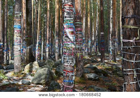 Sacred Grove Of Tears. Zalaal - Tapes, Tied To The Trees. Arshan Village, Buryatia