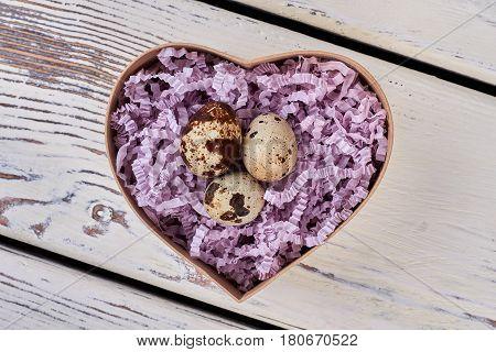 Quail eggs in heart box. Purple shredded paper. Fragility of life.