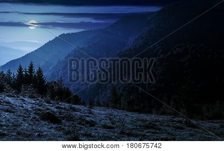 coniferous forest on a steep mountain at night in full moon light