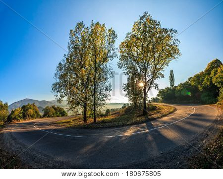 Trees On Serpentine In Mountains At Sunrise