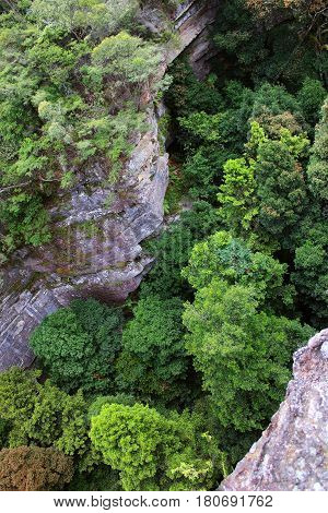 A big forrest and cliffs from above