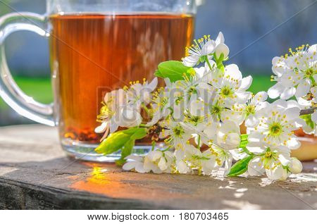 Galss cup of tea and apple tree flowers outdoor in spring morning