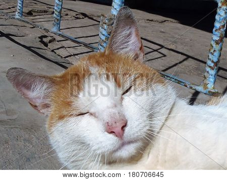 A red cat with a scratched pink nose is asleep and basking in the sun