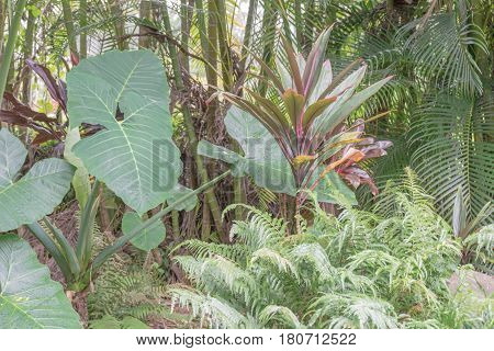 Tropical Plants: a closeup of a variety of tropical plants