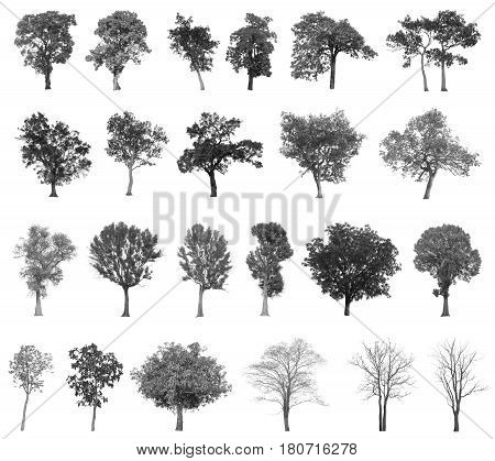 Black Tree Silhouettes Isolated On White Background, Tree Branch, Set Of Abstract Trees, Tree With A