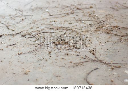 many Bird dropping on the floor look very bad and too dirty with copy space