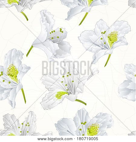 Seamless texture rhododendron white flower Mountain shrub cracks vintage vector illustration