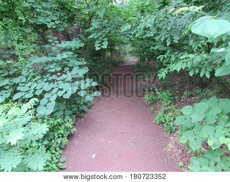 The  Dirt  Path  Vanishes  into  a  Forest  of  Green,  Washington's  Crossing,  Pennsylvania