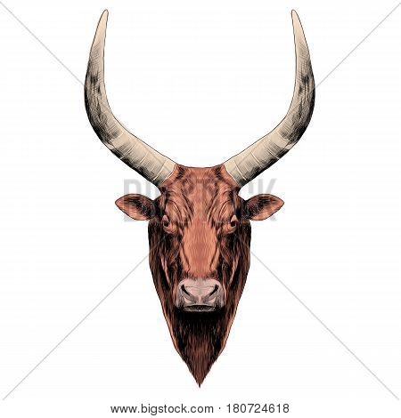 the head of a bull with large horns symmetrical sketch vector graphics color picture