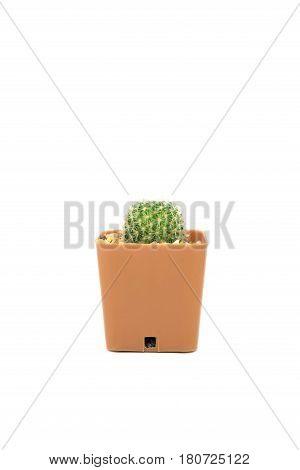 Single Cactus Isolated On White Background.