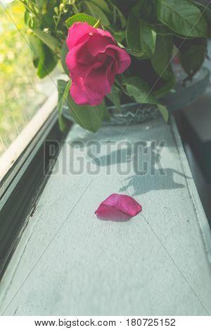 Vintage Of Fallen Leaves Red Rose For Idea Background.vintage Filter Effect.