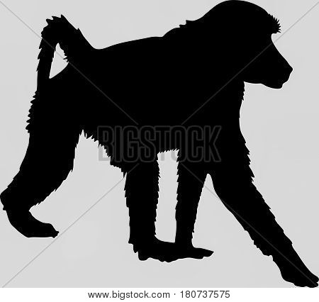 Hand drawn silhouette of a wild baboon - Illustration, black isolated on white background
