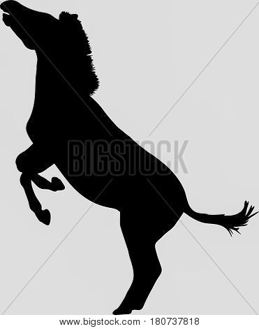 Hand drawn silhouette of a wild zebra jumping - Illustration, black isolated on white background