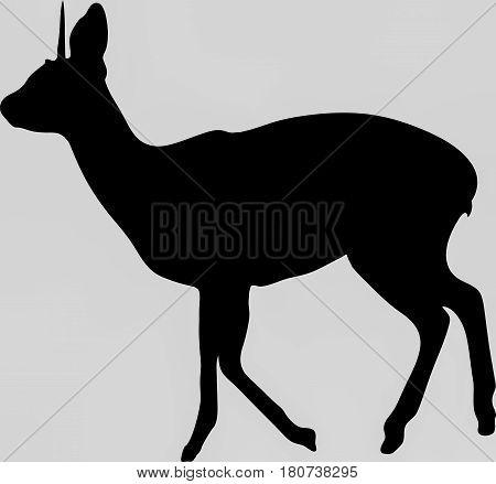 Hand drawn silhouette of a wild klipspringer antelope - Illustration, black isolated on white background