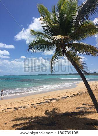 palm tree in Balneario la Monserrate beach in Luquillo, Puerto Rico