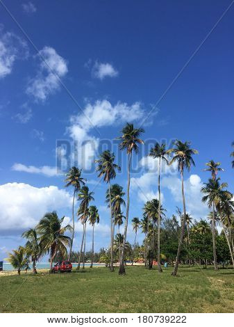 palm trees at Balneario Luquillo beach in Puerto Rico